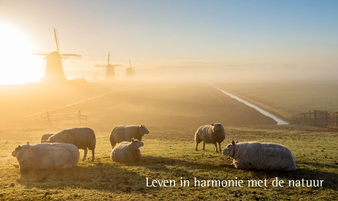 leven in harmonie website 2.jpg